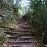 Der Weg auf den Mount Kinabalu fuehrt viele Stufen hinauf – hier aus Holz.