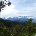 Blick ins gruene Borneo