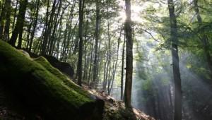 Das grüne Wunder - unser Wald